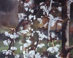 Apple Blossom 22x30