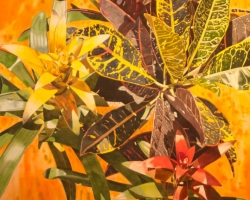 Croton with Bromeliad 60x40