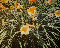 Day Lilies 40x60