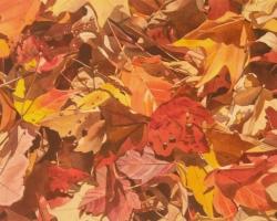 Fall Leaves 11x14