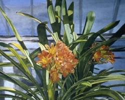 Greenhouse Clivia 30x50