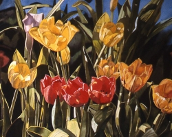 Greenhouse Tulips 16x24