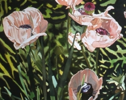 Pink Poppies 30x60