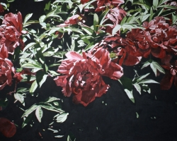 Red Peonies 40x60