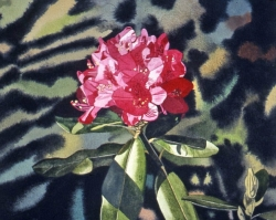 Red Rhododendron 12x12