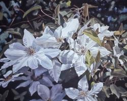 White Clematis 18x24